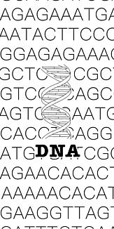 DNA 塩基配列