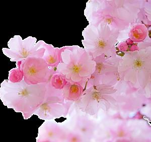 花(桜)ケース