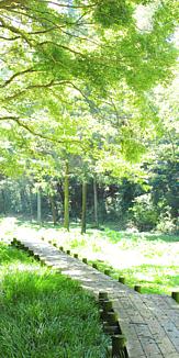 遊歩道 自然 森林