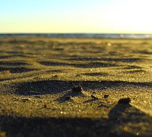 砂浜 海岸