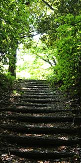 森林 階段