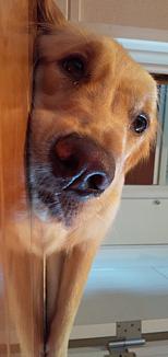 ねそべるイヌ
