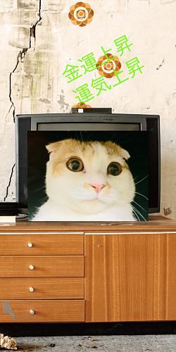金運招き猫 スマホカバー