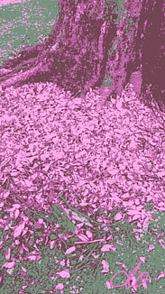 『枯れ葉』③
