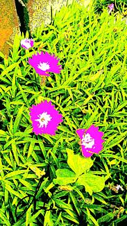 『ピンク色のかわいい花2ー①』