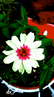 〈白い花〉①