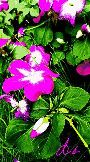 ~~ピンク色のお花~~③