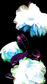 〔~camellia~〕②