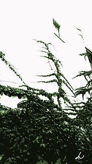 〔壁を這う蔦(つた)②〕