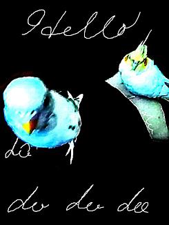 『Dotto bird』①