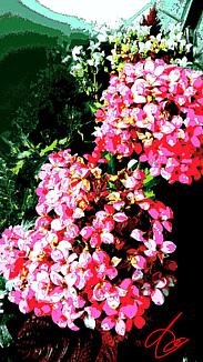 『beautiful flower』