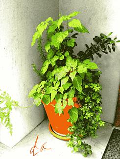 『玄関外の植木』②