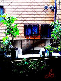 〈テラスの植物②〉