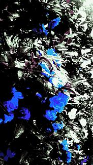 〔薔薇のような椿①〕