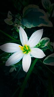 『白い花』