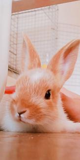 可愛い!ウサギのケース