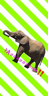 【動物】ゾウのケース