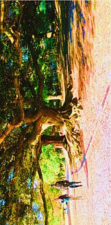大きな木と散歩するひと