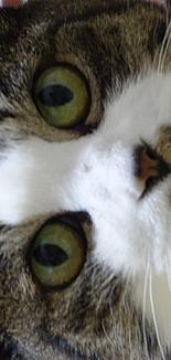 猫の目その2
