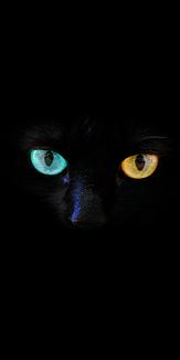 Oddeye Cat