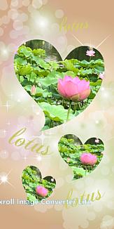 蓮(ハス) beautiful Lotus ver.2