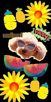 meimei夏だ!スイカだ!美味しいワン!!