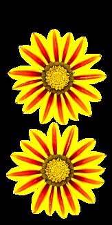 シンプル 花 ケース クリア