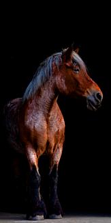 馬 ケース