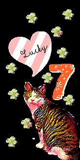 lucky7Cat