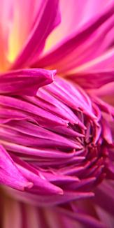 花 華 Flower Pink ピンク
