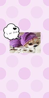 I am dog