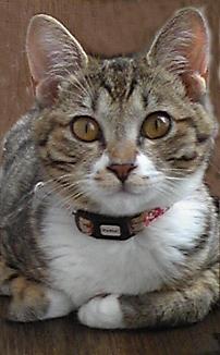 くりくり猫さん2