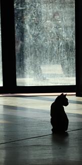 朝の光と猫