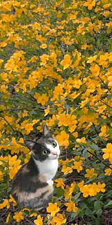 三毛猫ラブ