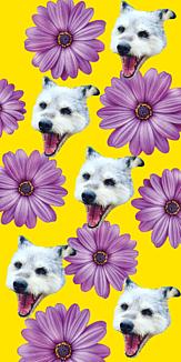 セーラちゃん【お花1】