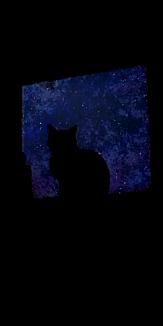 星空とネコ
