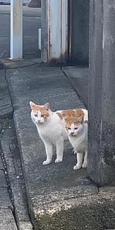 ひょこっと猫ちゃん