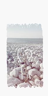 海で咲いた花(白黒)