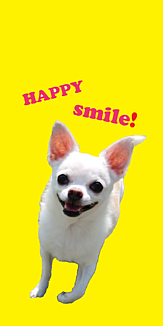 HAPPY SMILE! チワワ イエロー