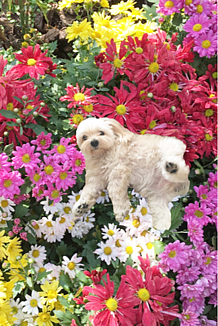 お花畑の犬さん♪