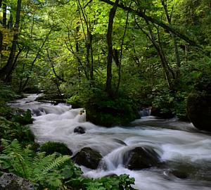 白神山地 川