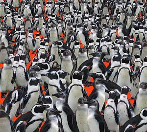 ペンギンが沢山!赤