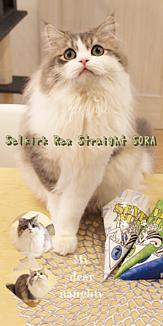 猫のSORA 5