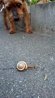 カタツムリを見つめる子犬