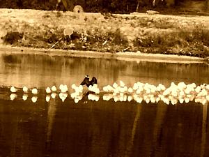 油絵の水鳥