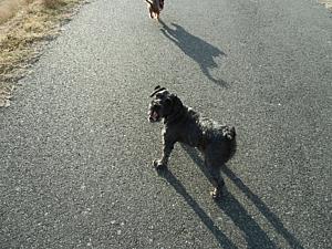 大きく口をあける犬