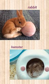 うさぎとハムスター