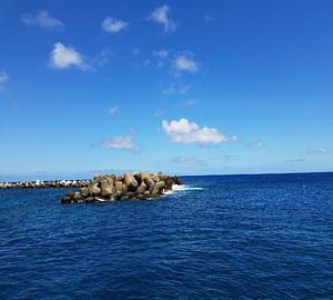 南の島のテトラ