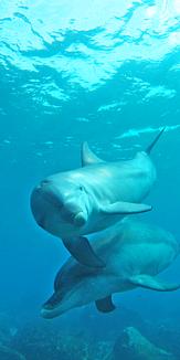 青い海を自由に泳ぐイルカ