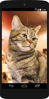 スマホの中にちょっとふてぶてしい猫76